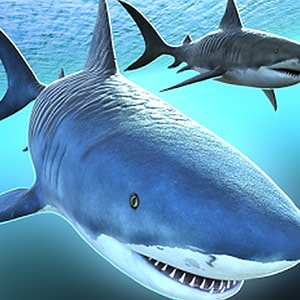 Sharks 3D Multiplayer